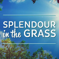 Splendour in the Grass - New South Wales, Australia
